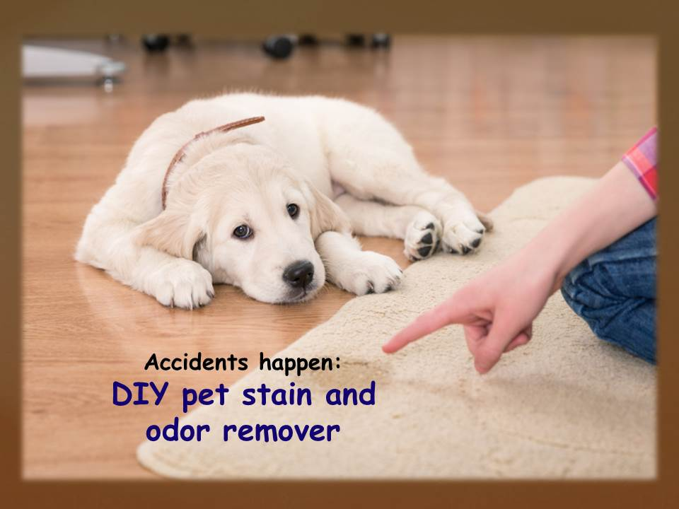 Accidents Happen Diy Pet Stain And Odor Remover Okc